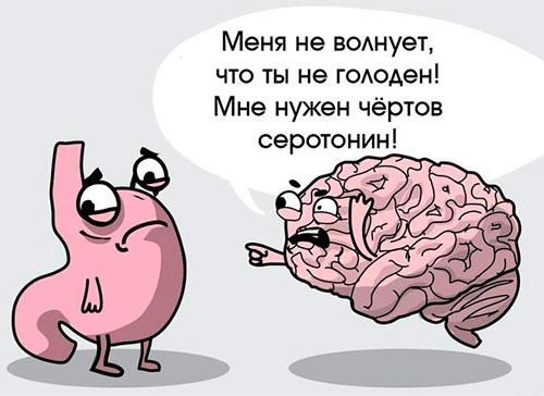 Серотонин и мозг